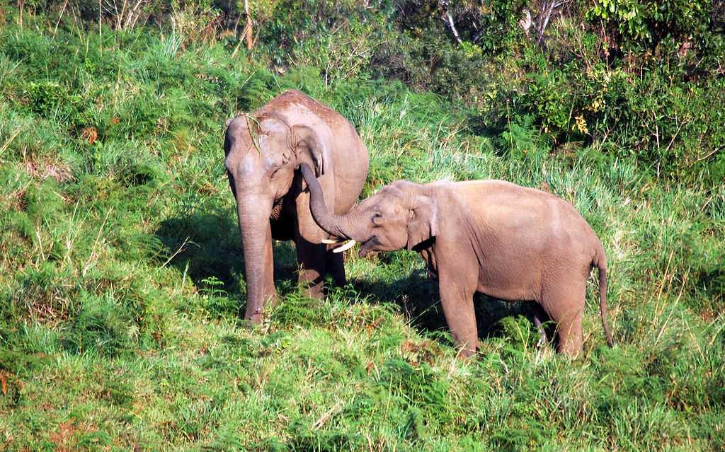 Mingle with the elephants in Gavi, Kerala