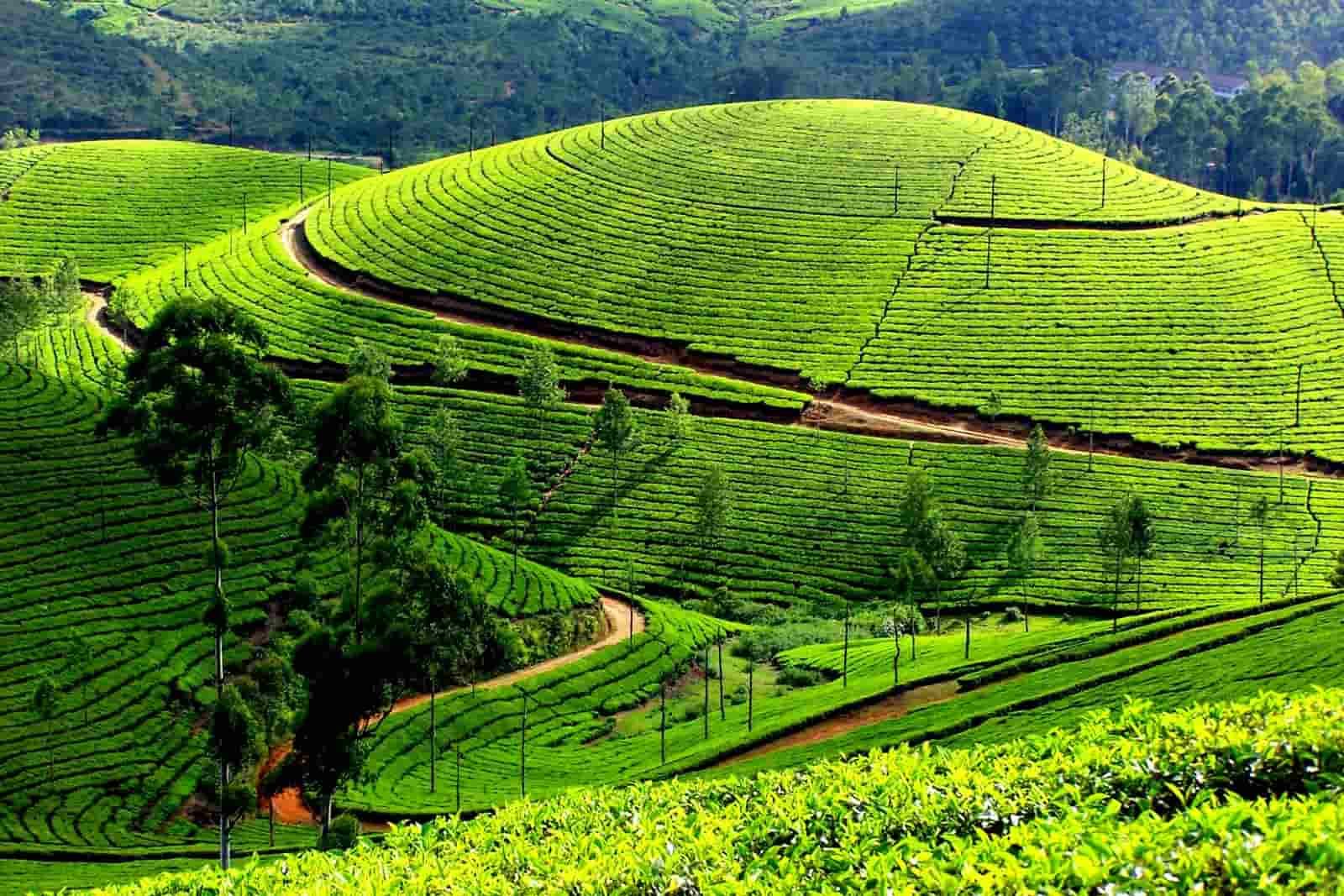Munnar – Pride of Kerala Tourism