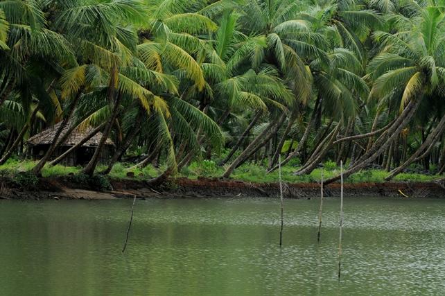 Veliyaparamba Backwaters kerala
