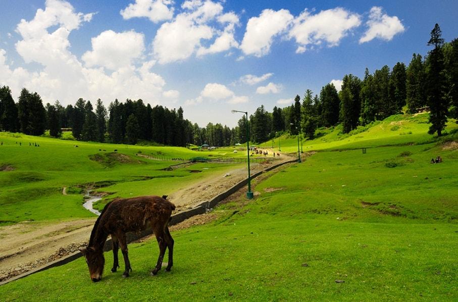 Yusmarg - Best Destination to Visit in Kashmir