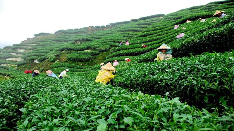 Visit Tea gardens