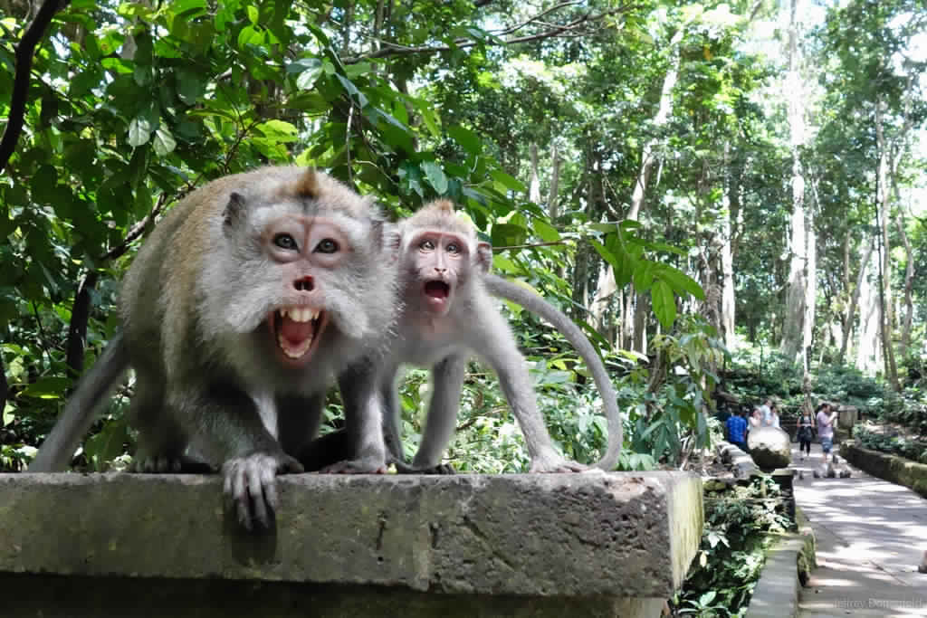 visit Ubud Monkey forest