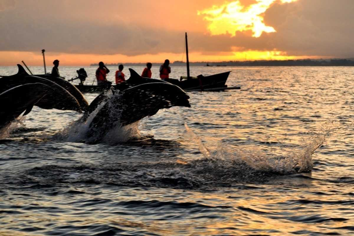Watch Dolphins At The Lovina Beach - best things to do in bali
