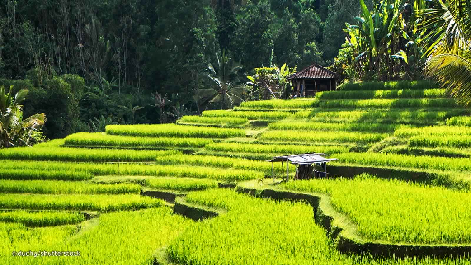 Explore The Heartland Of Bali - Ubud