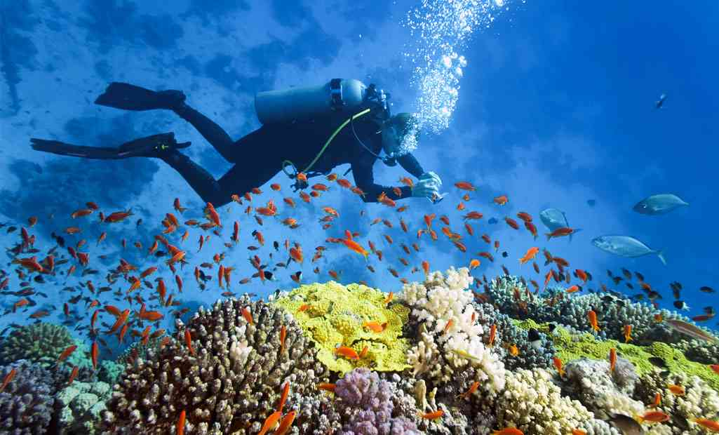 Exploring the underwater world in Mauritius