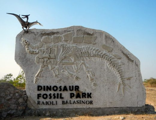 Take Your Loved Ones Or Kids Out In The Dinosaur Museum Park At Gujarat