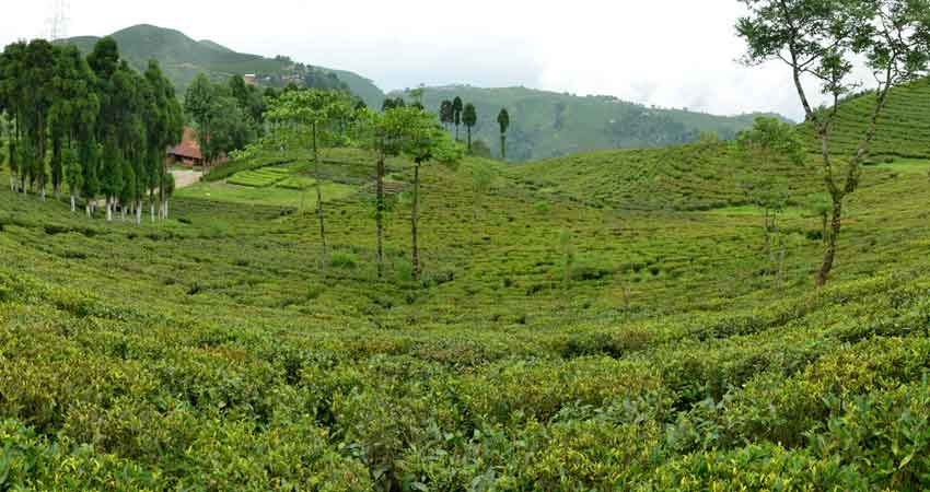Tukvar Tea Garden to Jaumney