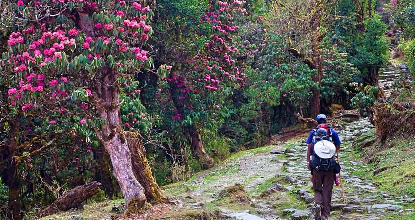 Varsey Trek in Sikkim