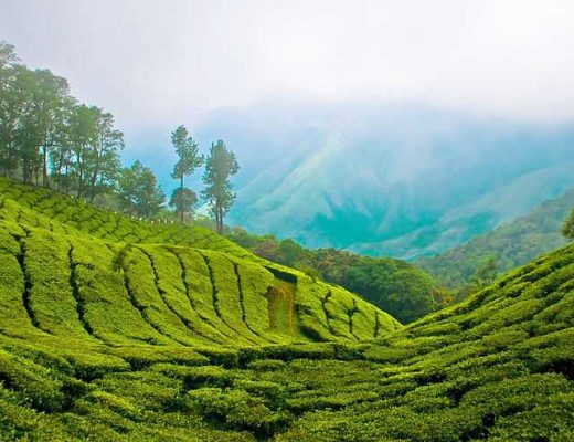 These Top 10 Places to Visit in Kerala Are Perfect to Unwind Romantically