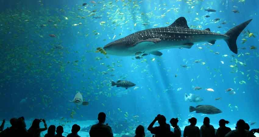 Marine-Creatures-At-Siam-Ocean-World