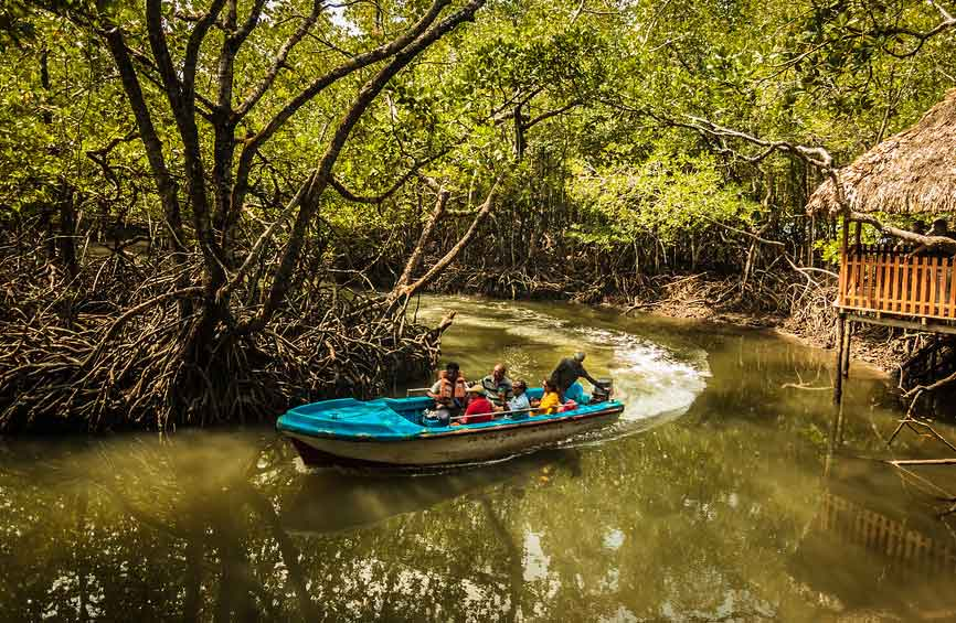 Mangrove Boat Ride Andaman