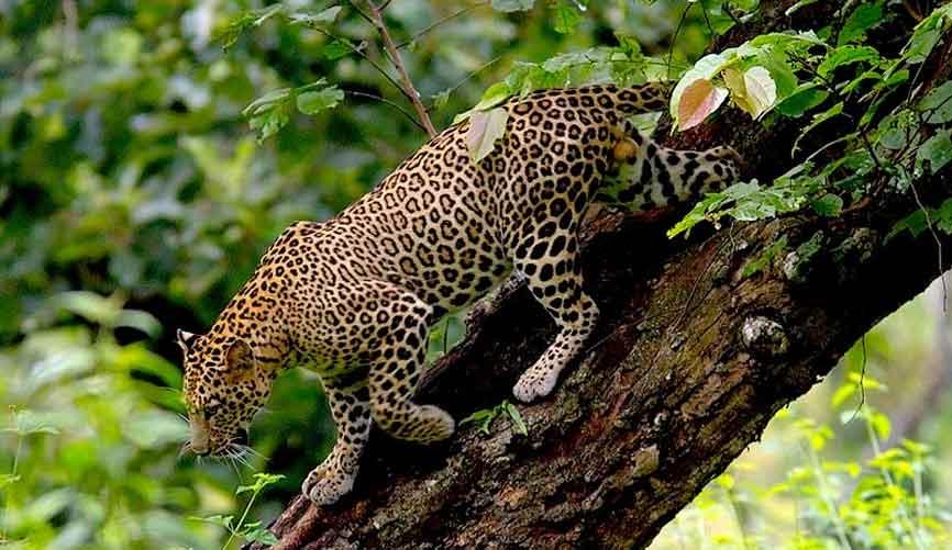 South India Wild life