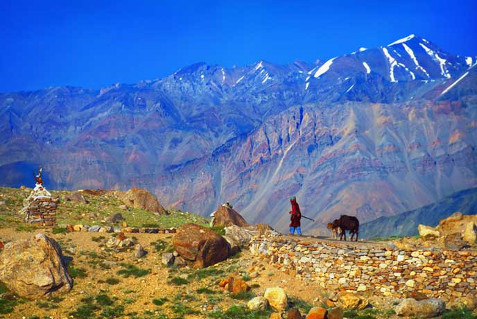Lesser Crowd ladakh