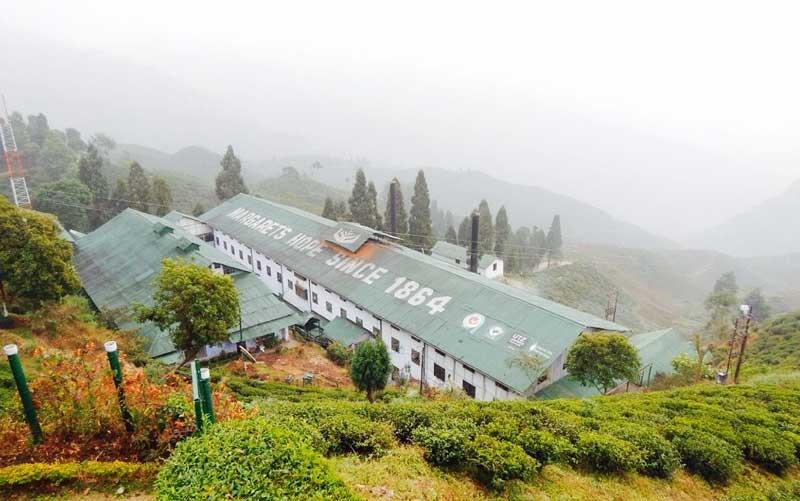 Tea Factory darjeeling