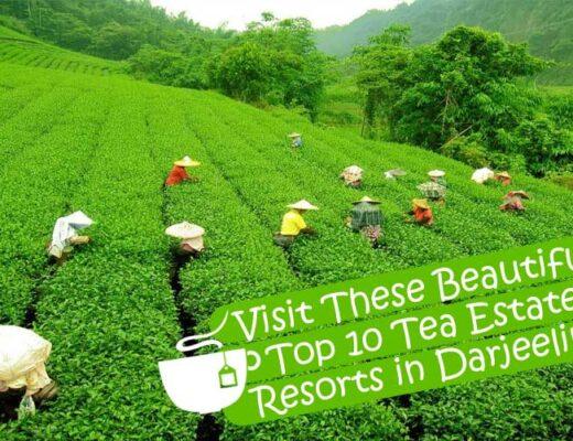 Top 10 Tea Estate Resorts in Darjeeling