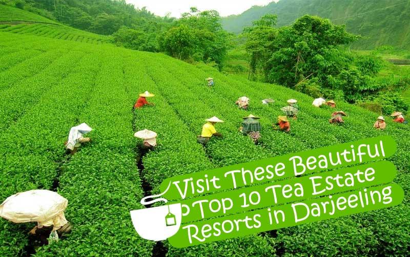 Visit These Beautiful Top 10 Tea Estate Resorts in Darjeeling