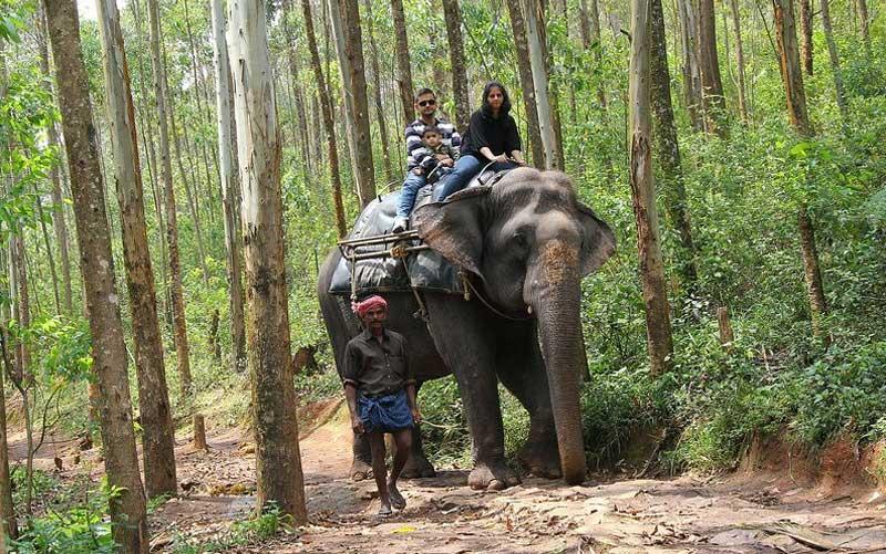 Elephant Safari at Carmelagiri National Park munnar