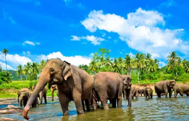 romantic honeymoon tour sri lanka