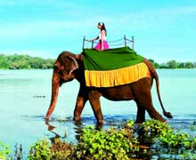 Sri Lanka Family Holiday Package