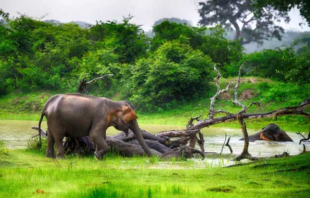 sri lankas romantic tour